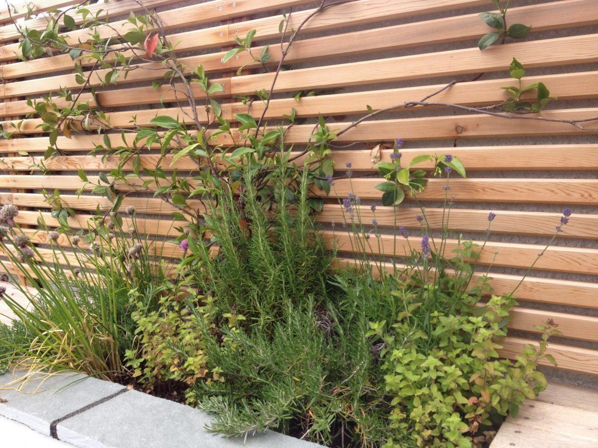 Garden design Wales fragrant planting